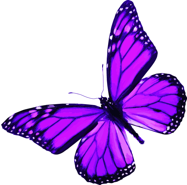 Butterfly Image link to top of page